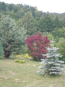 Sprzedam Dom Z Działką Widok Na Kazimierski Park Krajobrazowy Okazja Inwestycyjna  3